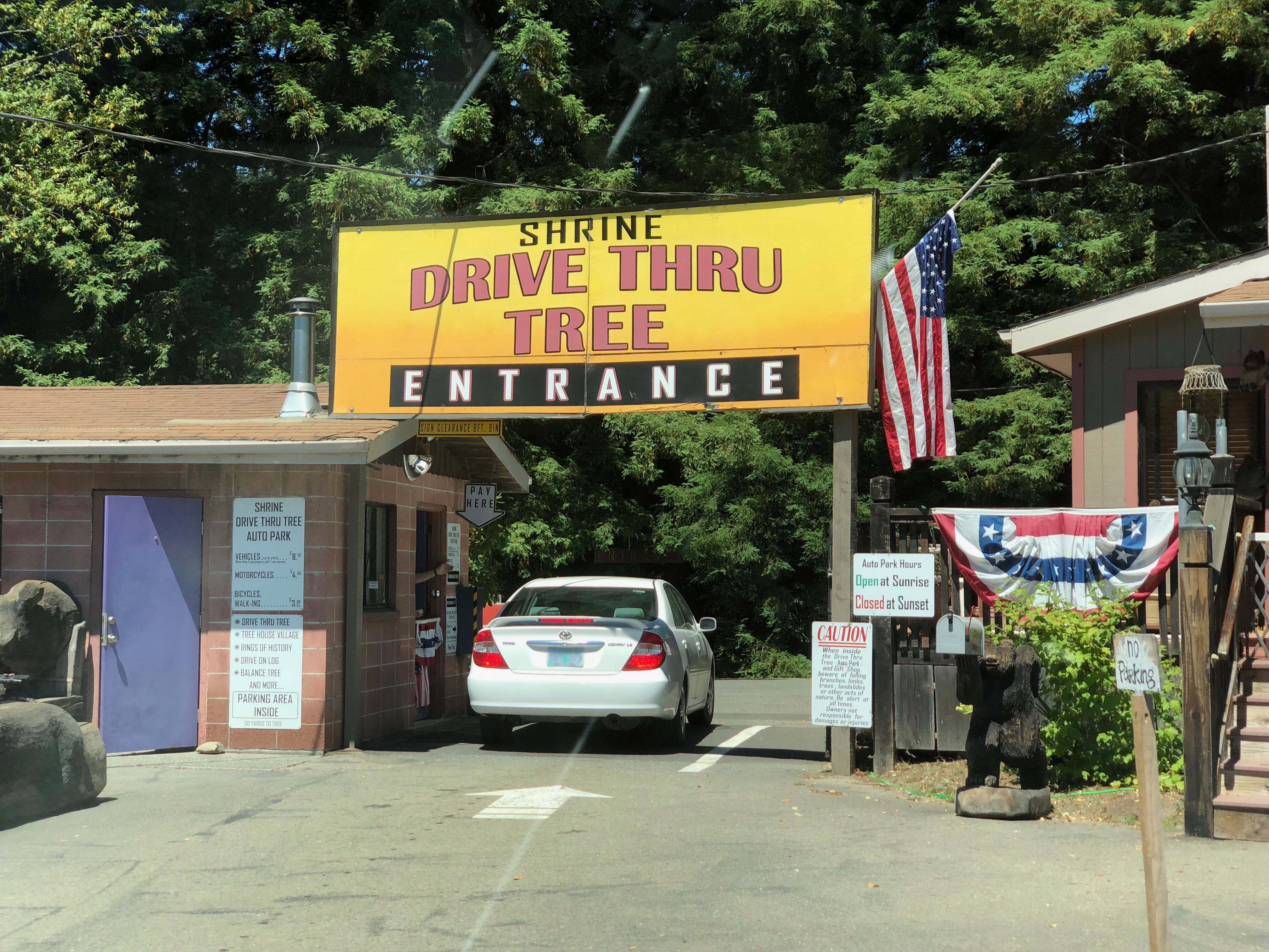 drive-thru redwood