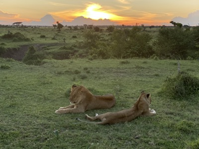 lions at sunset in ol kinyei conservancy